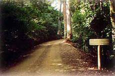 Rainforest Road