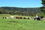 Oaklea Farmstay