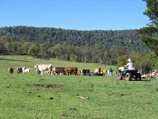 Scenic Working Farm